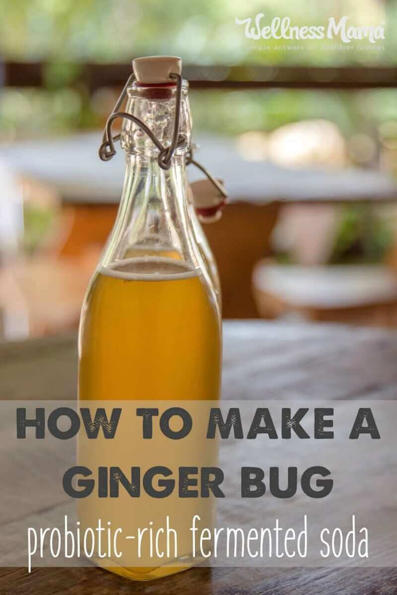 ginger bug