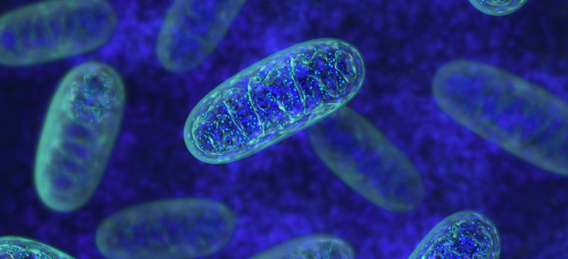 Mitochondria: 10 Ways to Boost the Powerhouse of Your Cells
